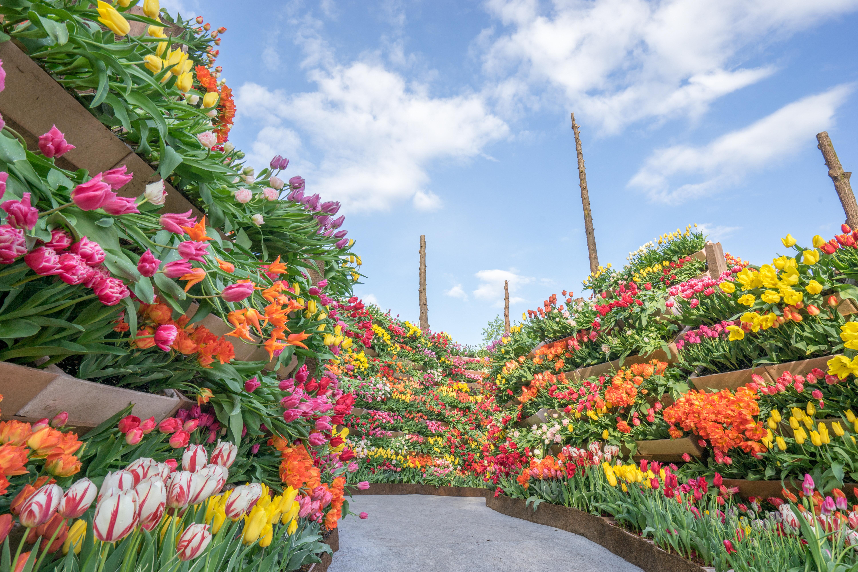[Toyama] Tonami Tulip Park