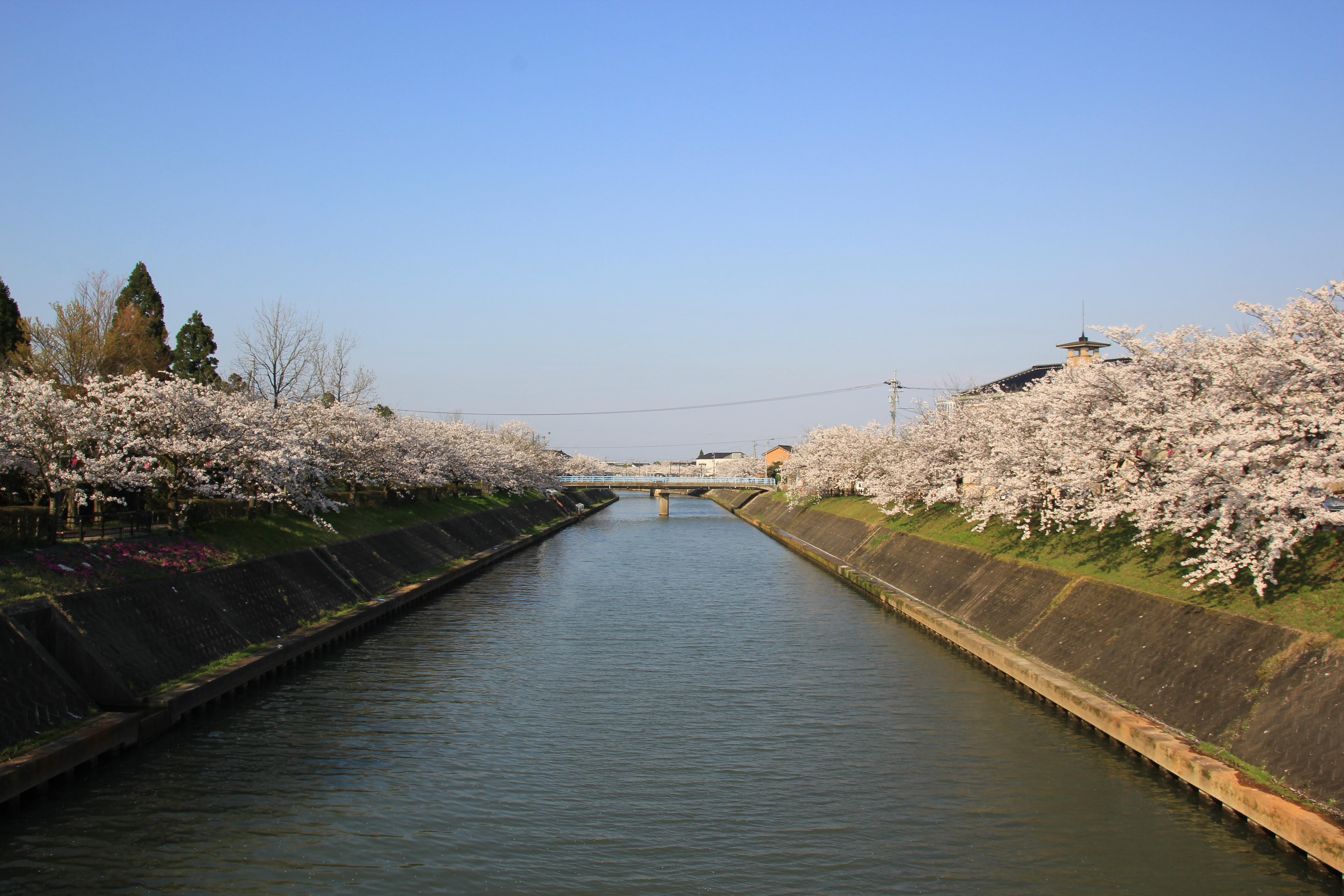 【2】Recommended spots in Hietsuno for beautiful cherry blossoms in spring