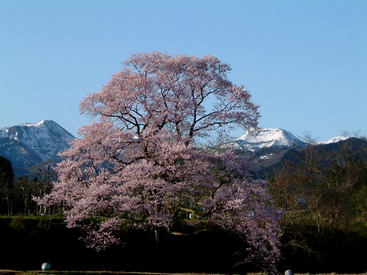 Mukaino no Edohigan