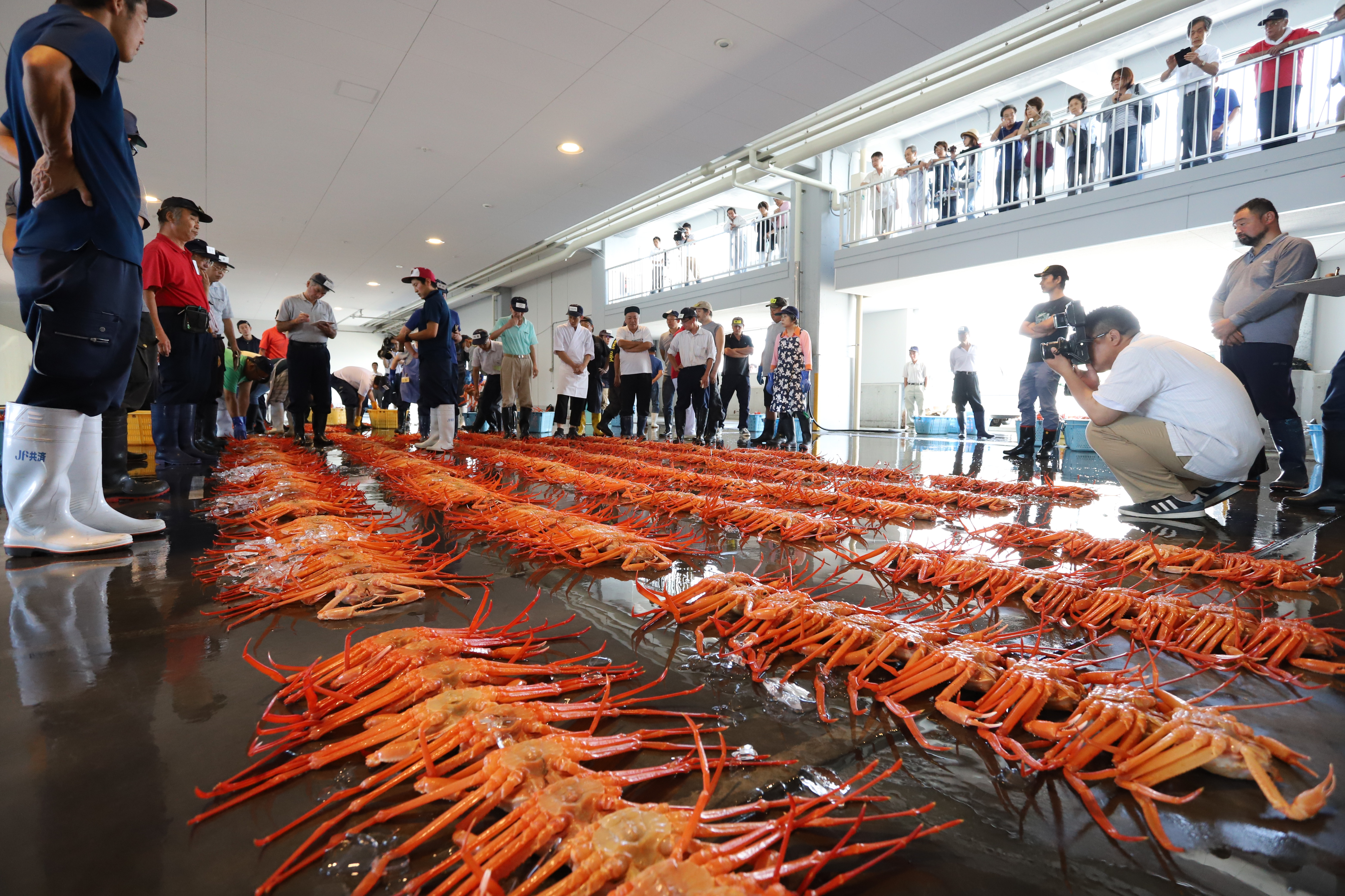 Daytime auction of red snow crabs