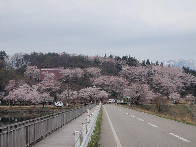 Sakuragaike