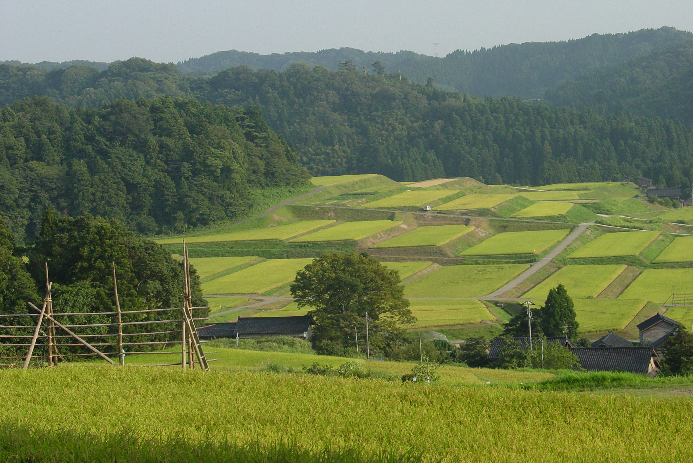 This is true autumn in Japan. Recommended spots for rural landscapes